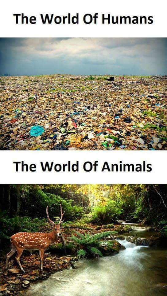 Audickas už švarią gamtą